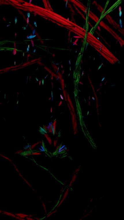 shida ecstasy in the abyss : black light 1
