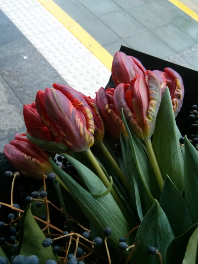 tulips at the tramstop