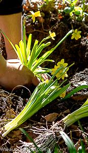 wake up on earth : daffodil photoshoot 2