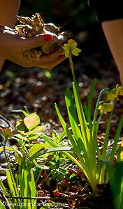 wake up on earth : daffodil photoshoot