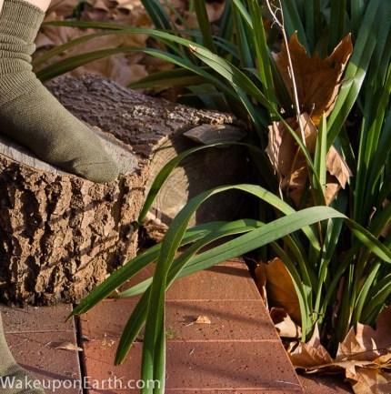wake up on earth : bamboo socks garden