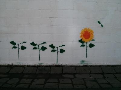 aerosol sunflowers