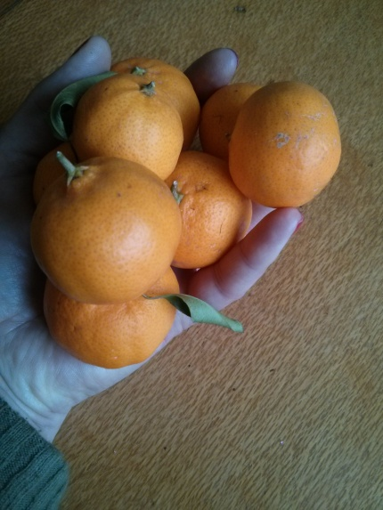 home grown mandarins