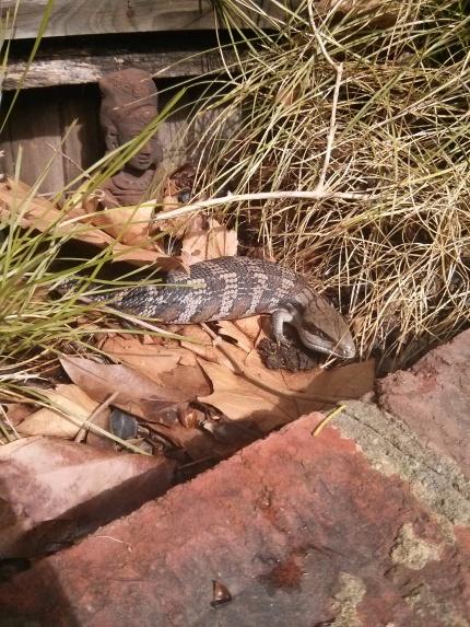 backyard lizard sunshine