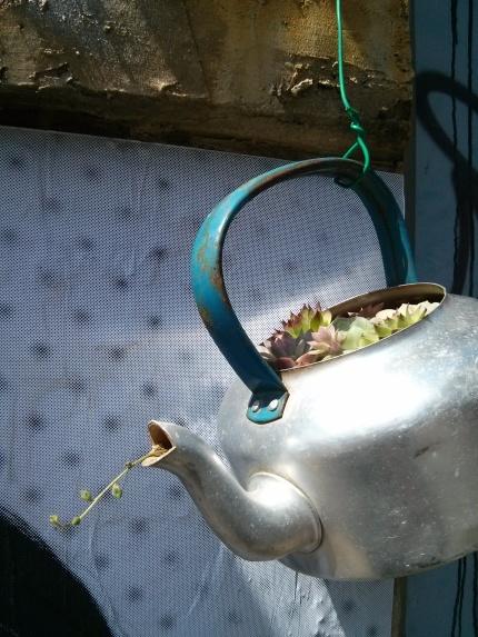 teapot garden : northcote