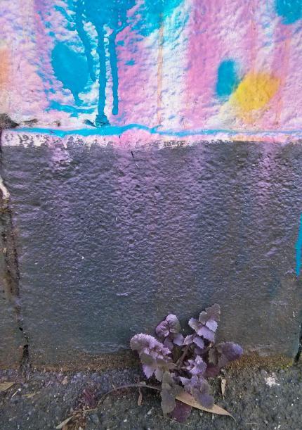 mimby jones robinson : collingwood, weed