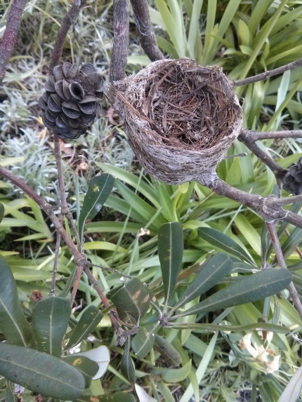 empty nest : cape conran