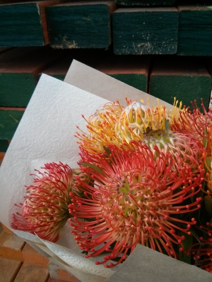 leucospermums and timber : collingwood