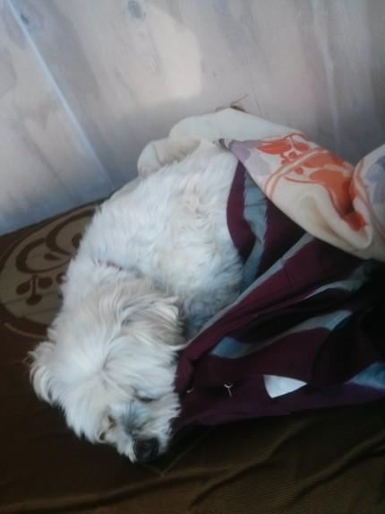 naptime at tombo northcote