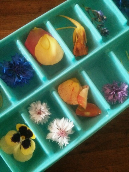 edible flower ice cube tray